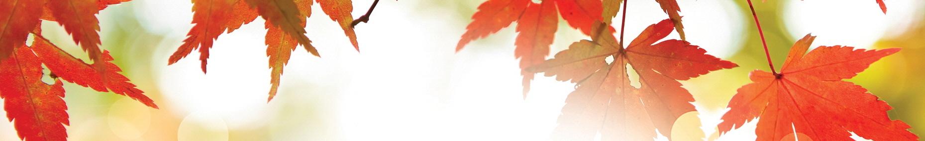 190818-2019가을두날개선교축제_행복한연합선교-배경